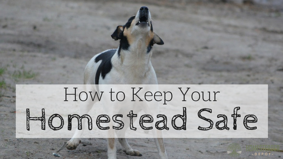 7 Simple Ways to Keep Your Homestead Safe