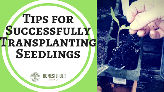 Tips for Successfully Transplanting Seedlings