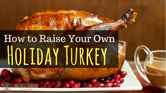 Raising Your Own Holiday Turkey