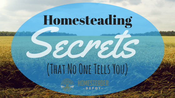 The Reality of Homesteading: What No One Tells You