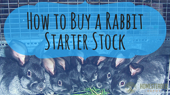 How to Buy a Rabbit Starter Stock