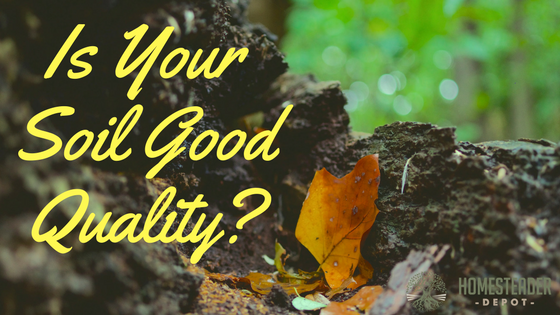 Is Your Soil Good Quality?