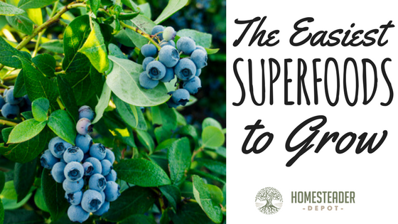 The Easiest Superfoods to Grow