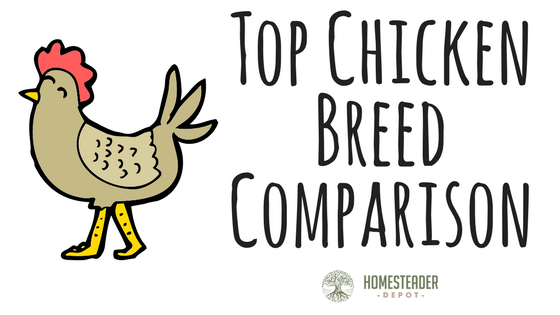 Top Chicken Breed Comparison (Infographic)