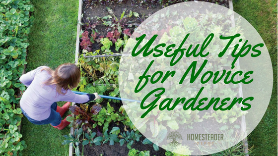 Useful Tips for Novice Gardeners