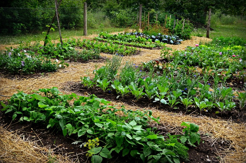 Is your soil good quality homesteader depothomesteader for Soil quality indicators