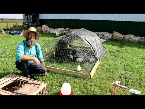 Chicken Coop for $1 and an Hour to Make (Video)