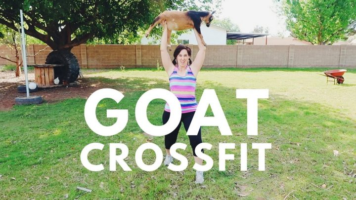 Goat Crossfit (Video)