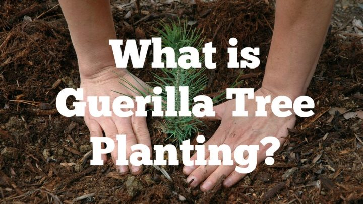 What Is Guerrilla Tree Planting?