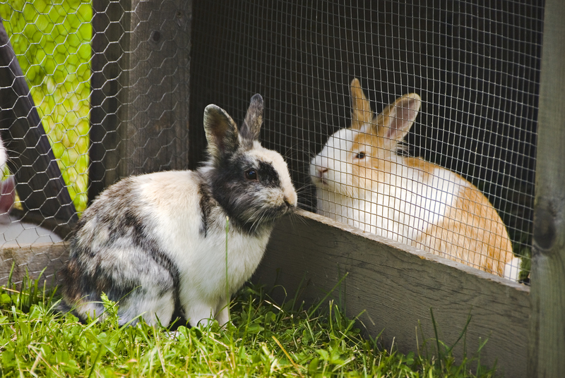 Can Rabbits Contribute to a Homestead?