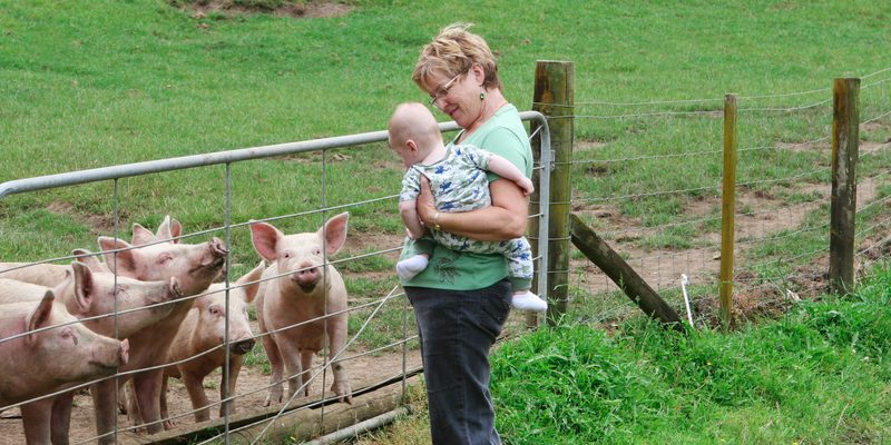 5 Odd Reasons Pigs are Extremely Beneficial