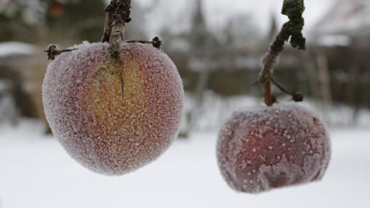 Tips to Stockpile Food for the Winter Months