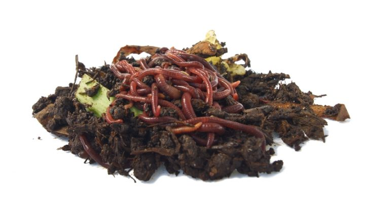 Do-It-Yourself Worm Casting Methods for Compost