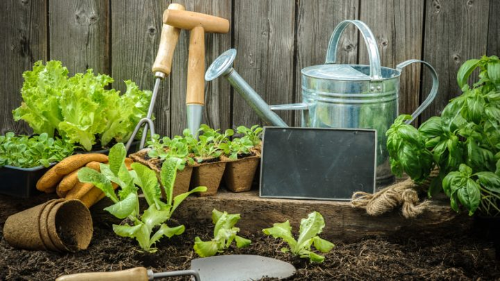 5 Gardening Budget Hacks