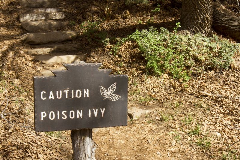 Identifying and Understanding Poison Ivy