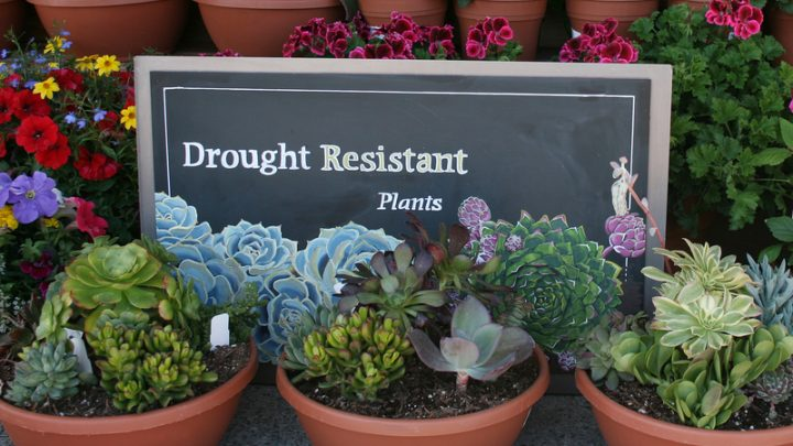 13 Drought Tolerant Plants for Low Maintenance Landscapes