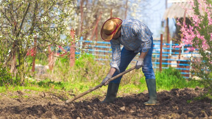 4 Critical Methods to Improve Your Garden Soil
