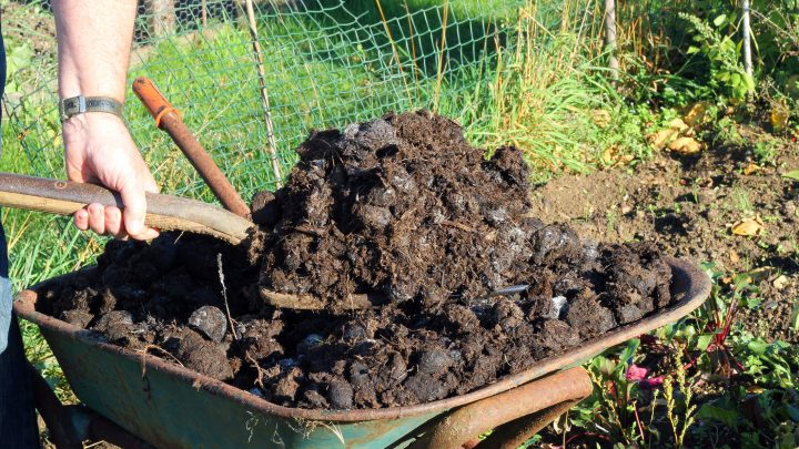 5 Tips for Using Manures in Your Garden