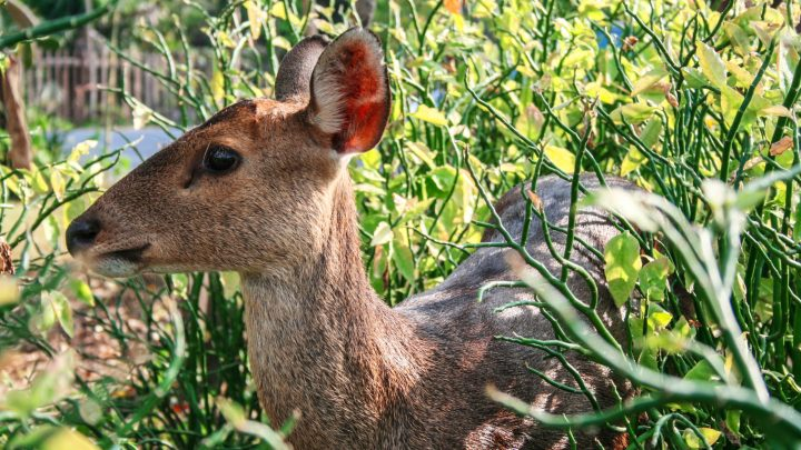 5 Tricks for Keeping Animals out of Your Garden