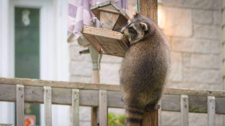 3 Tips to Outsmart Backyard Critters