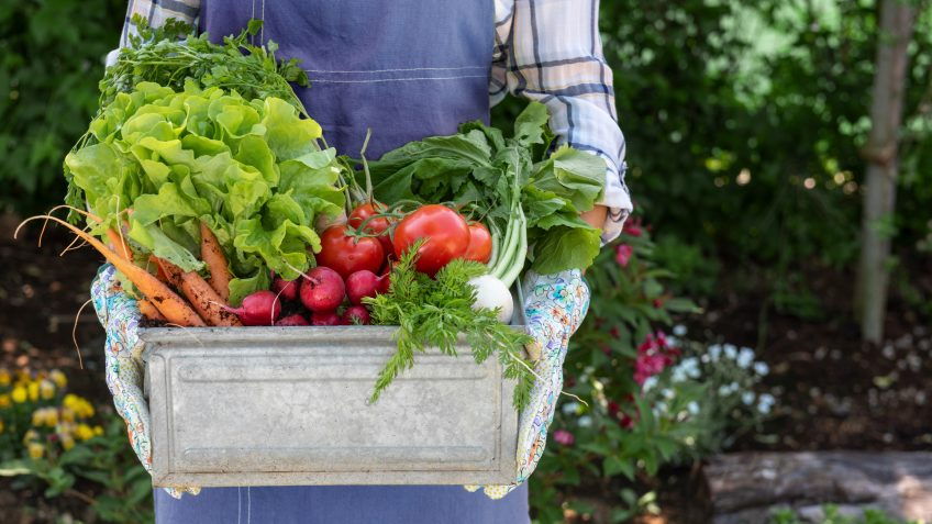 11 Simple Ways to Practice Sustainable Gardening