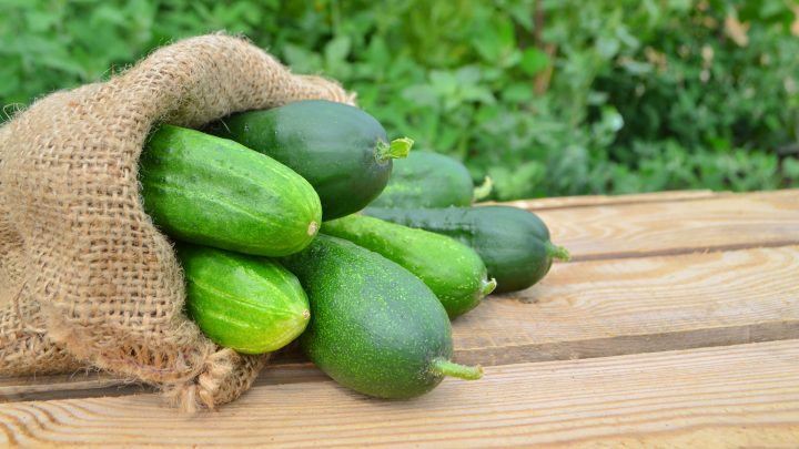 How to Grow the Perfect Cucumbers