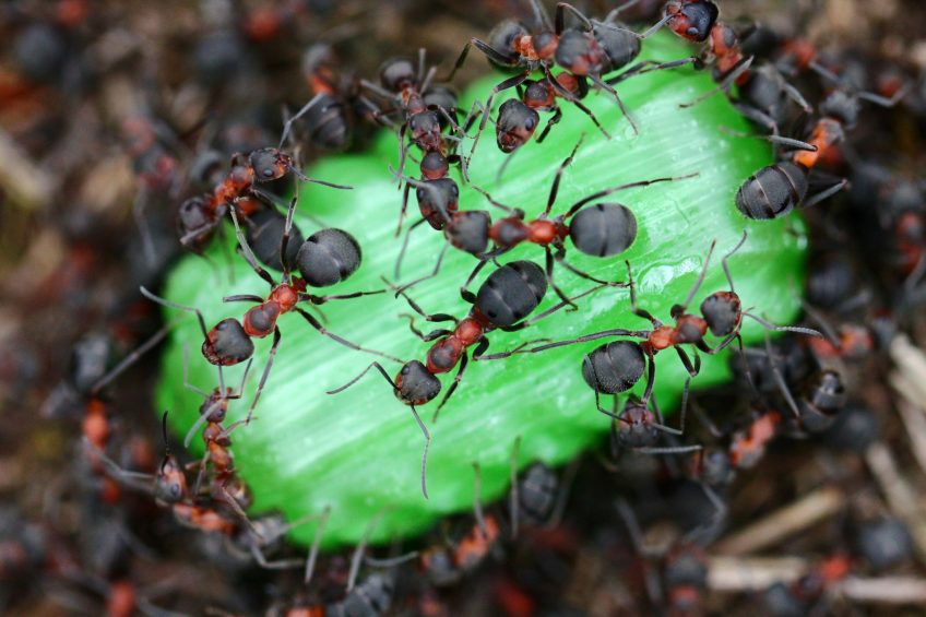 4 Ways to Solve Your Ant Problems