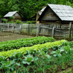Survival Gardening [Video]