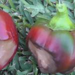[Video] Avoid these 10 veggie garden pitfalls...