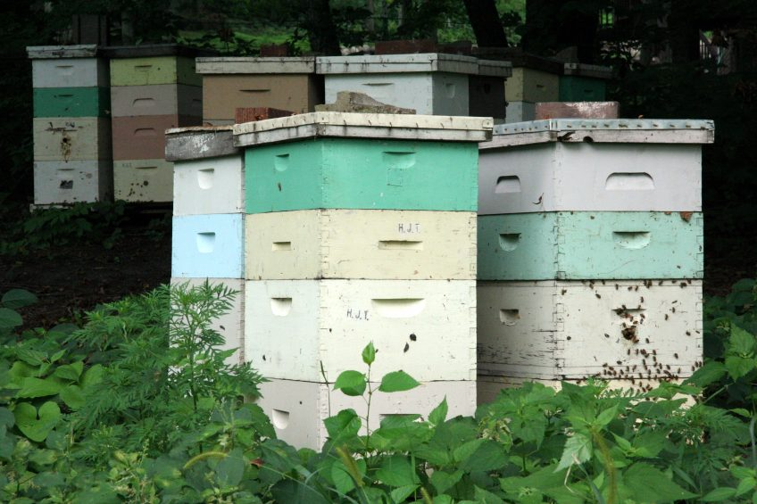 Benefits of Bees for Homesteads