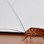 The Simplest, Safest Pesticide On Earth