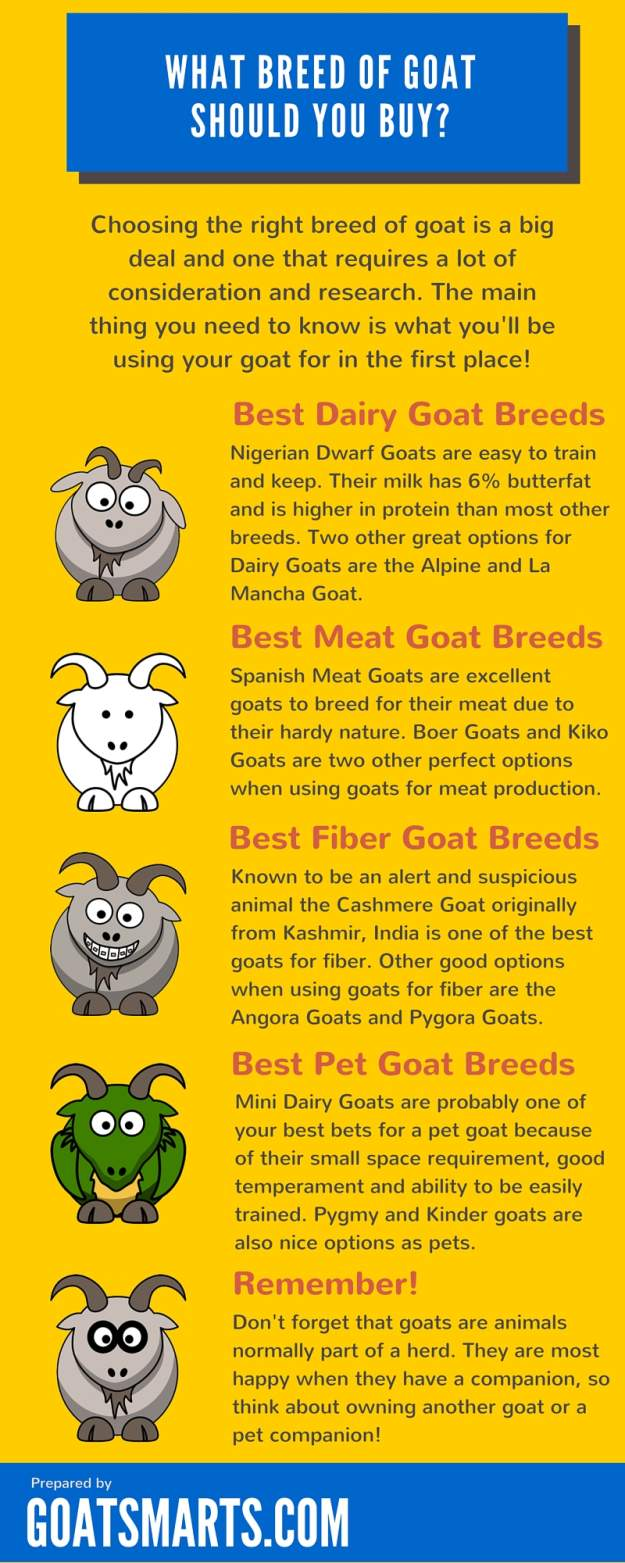 What Breed of Goat Should You Buy? (Infographic)