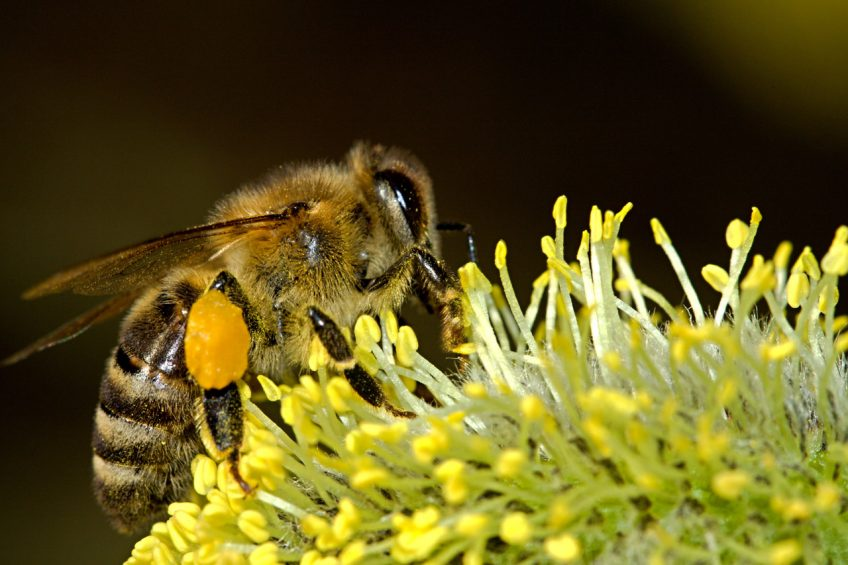 What to Plant to Attract Bees