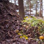What Items Should You Never Compost?