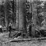 3 Things to Consider When Felling a Tree
