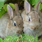 How to Keep Rabbits Away from the Garden