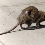 Tips to Keep Rodents OUT This Winter
