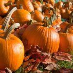 Best Ways to Use a Pumpkin