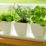 Growing Vegetables and Herbs Indoors
