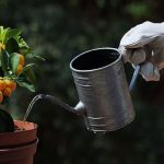 3 Amazing Benefits to Growing Fruit Trees in Containers