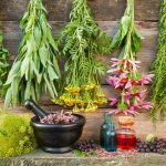 Medicinal Herbs and Roots for Homesteaders