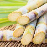 Harvesting Sugar Cane (Video)