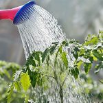 Tips For Watering Your Garden