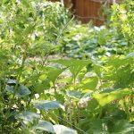 How to Plant a Hidden Survival Garden