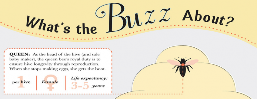 All About Bees (Infographic)