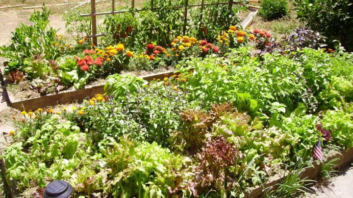 Tips for Gardening on a Slope
