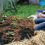The Easiest Gardening Method You'll Ever Try