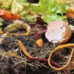 5 Things you Should NOT Compost