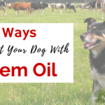 3 Ways to Protect Your Dog With Neem Oil