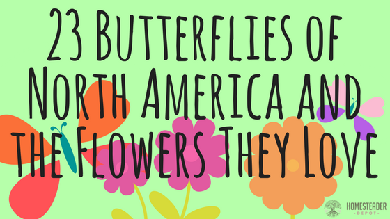 North American Butterflies and the Flowers They Love (Infographic)